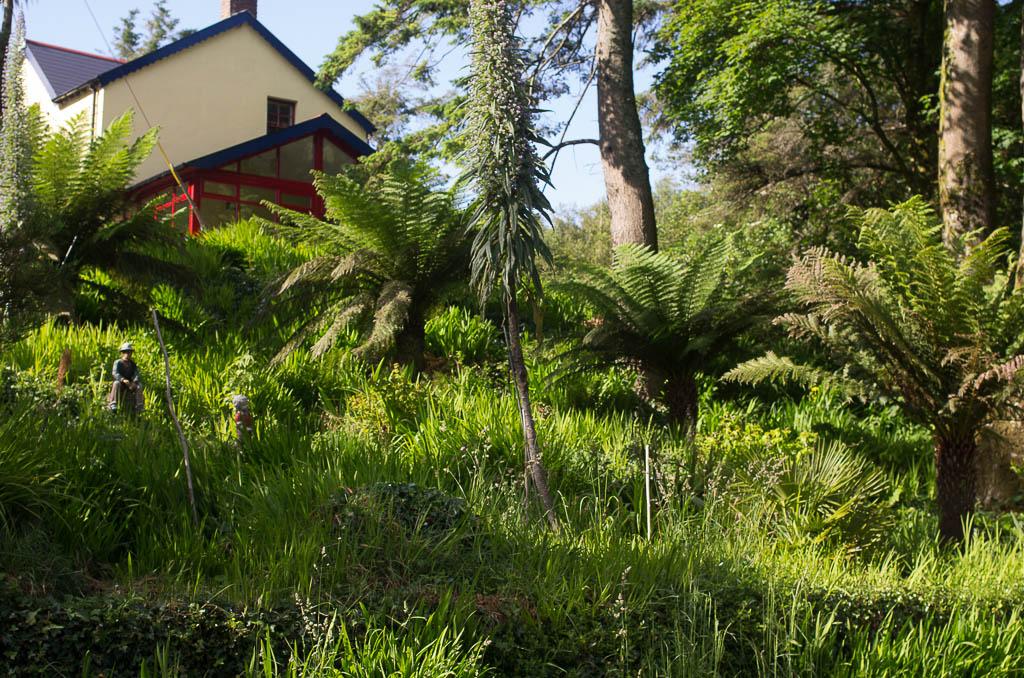 Végétation luxuriante dans la péninsule de Sheep's Head.
