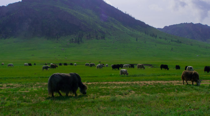 La Mongolie à vélo: Le Parc National de Terejl