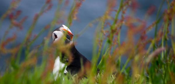 Les Orcades : un paradis pour les oiseaux … et les amoureux de la nature