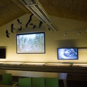 A l'intérieur, des télévisions montrent des nids d'oiseaux par webcam en direct